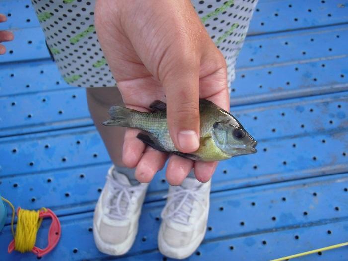 前回の釣行では思うように釣れなかったので、今日はたくさん釣りたい…