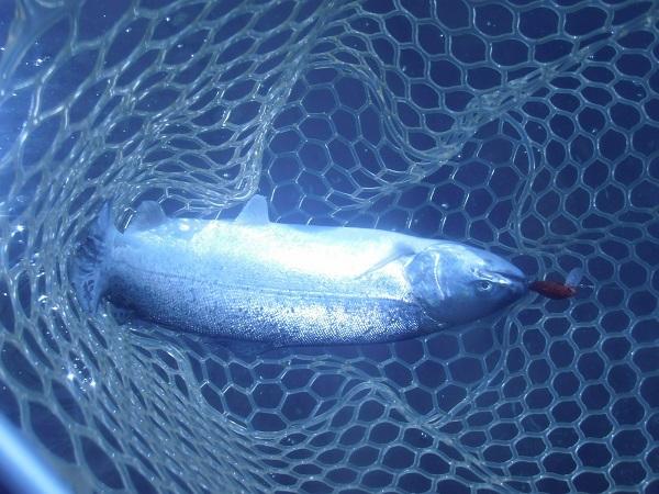 川場FPさんに釣行 日中は夏のような暑さでしたが、午前半日で30匹の釣果でした\(^ ^)/