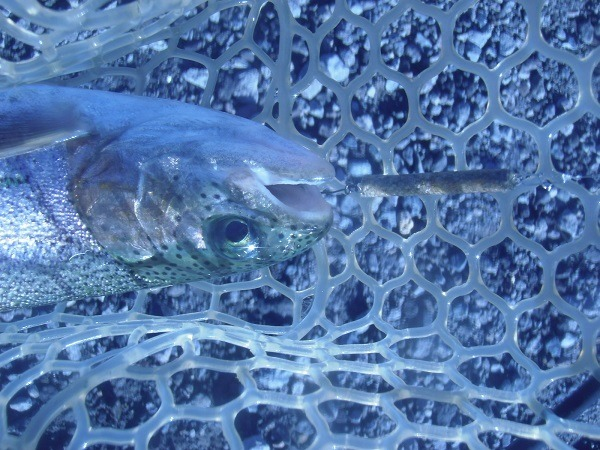 川場FPさんで自作の魚皮貼り「なんちゃってX」を実釣検証 しっかりゲットしましたよ(*^-^*)