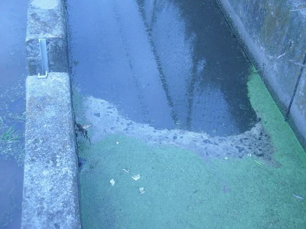 こちらが、サービスカット。ごく普通の田んぼの用水路で、水もそうキ…