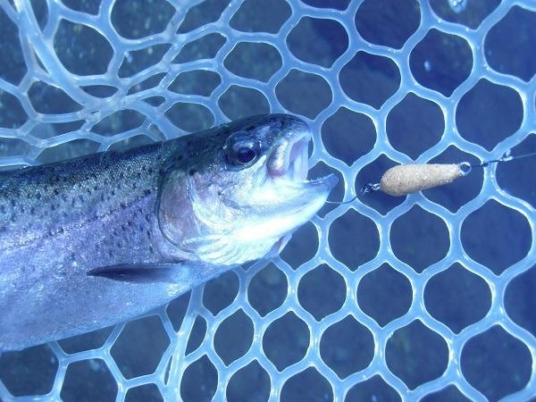 猛暑日続きの中 川場FPさんに釣行 午前5時間で釣果36匹でした(=^_^=)