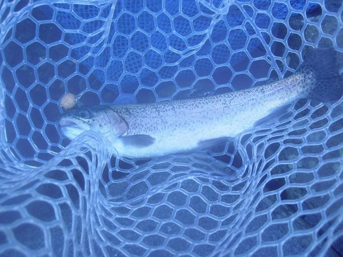 自作のハンドメイドルアーほかで高釣果 川場FPさんで午前半日で60匹釣った(^^)
