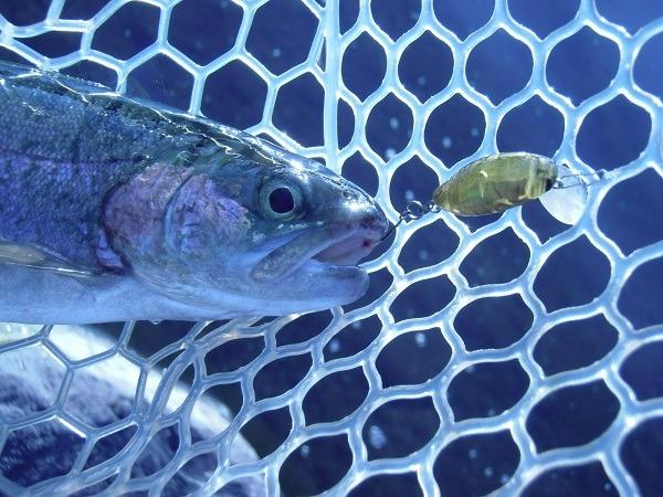 川場FPさんにて、よく釣れるミニシケイダーをシークレットチューンで更に釣れる仕様にして釣ってみた(*^ワ^*)