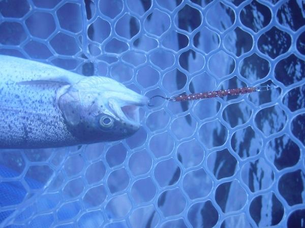 よく釣れるXスティックルアーを卑怯な色ペレットカラーに塗って釣りました(*^ー゚)v
