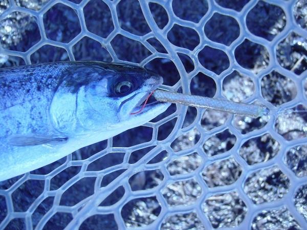 宮城AVさんに釣行しました 自作のゆるペレちびで釣りました 5時間で釣果23匹でした(^―^)