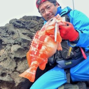 八丈島 地磯のショアジギングで特大アカハタ1.5kg!