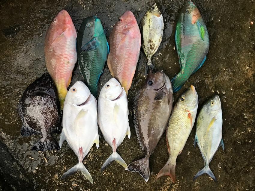 美味しい数釣り