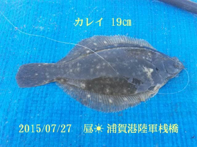 7月27日に浦賀港陸軍桟橋で釣りました