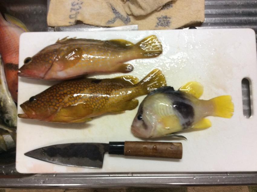 珍魚⁉️が釣れた。