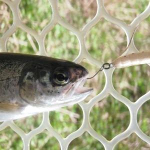虫を模した手作りのハンドメイドルアー「ブドウ虫ルアー」を使って1時間で30匹釣れました(*^_^*)