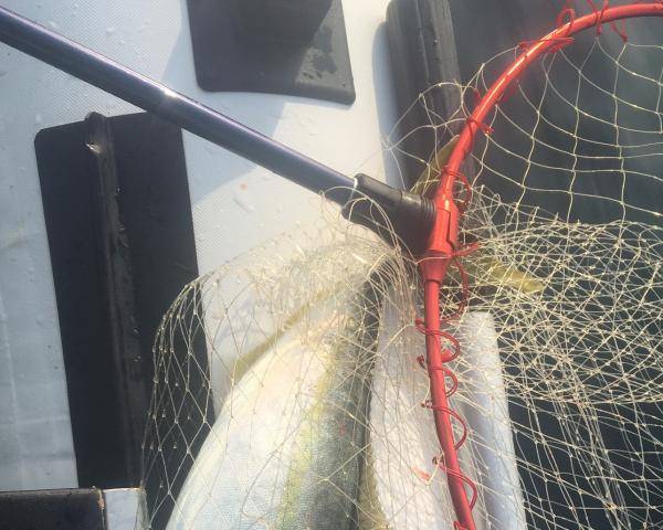 久しぶりのミニボート釣り