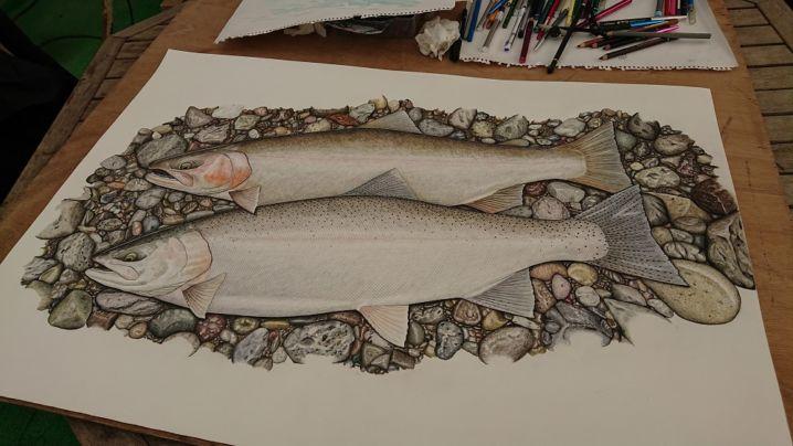 昨年釣った63cmの虹鱒と60cmの鳳来鱒の魚拓絵完成しました!!