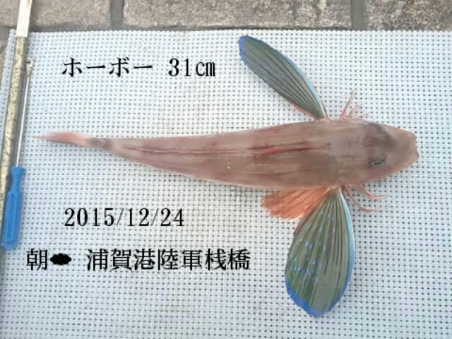 奇麗な魚です
