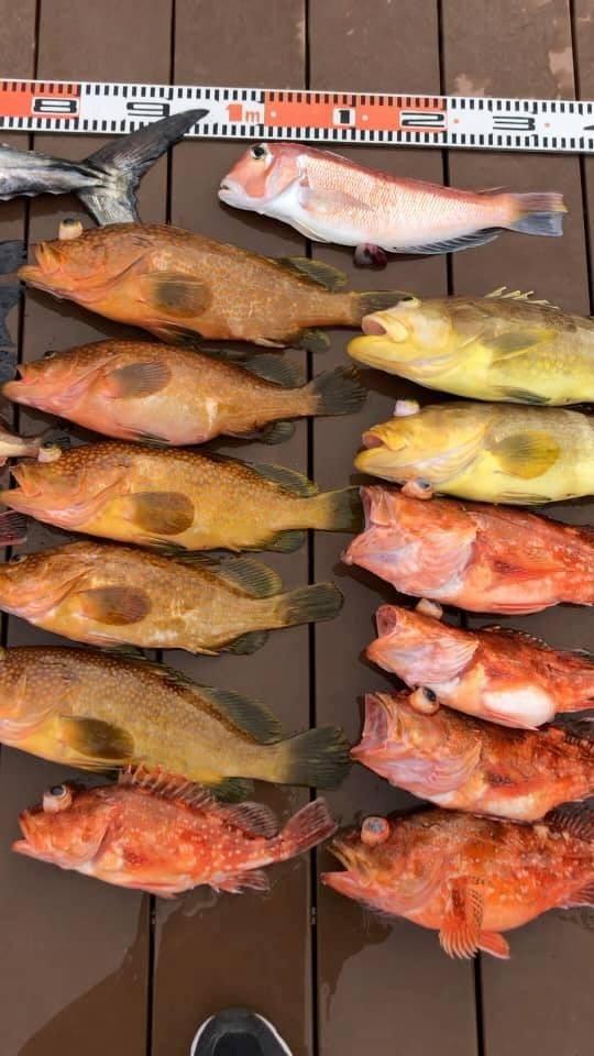 マリーナ萩です。色々な魚種が釣れてます。