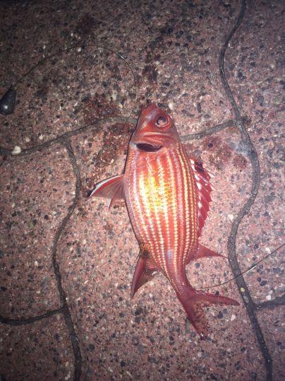 石垣港で夜釣りをしたよ