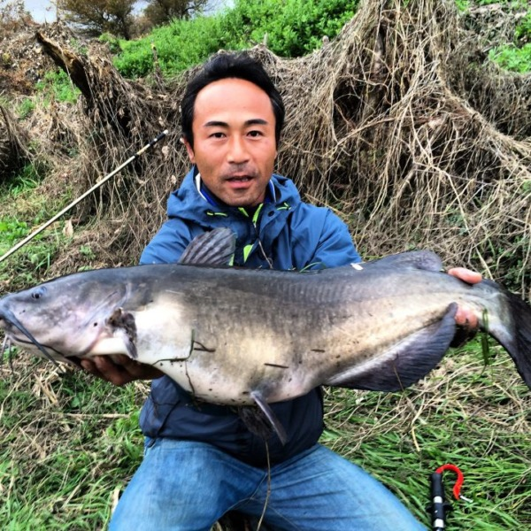 2014 catfish