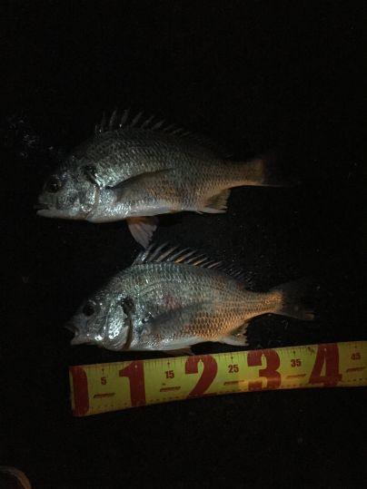 神戸湾奥チニングにて41センチ×2