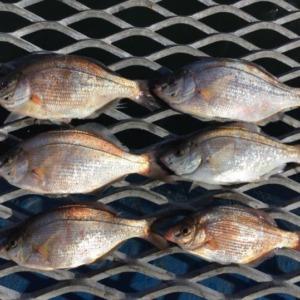 久しぶりに本牧海づり施設で海釣り。
