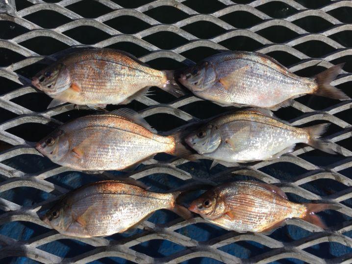 本牧海づり施設で釣りました。