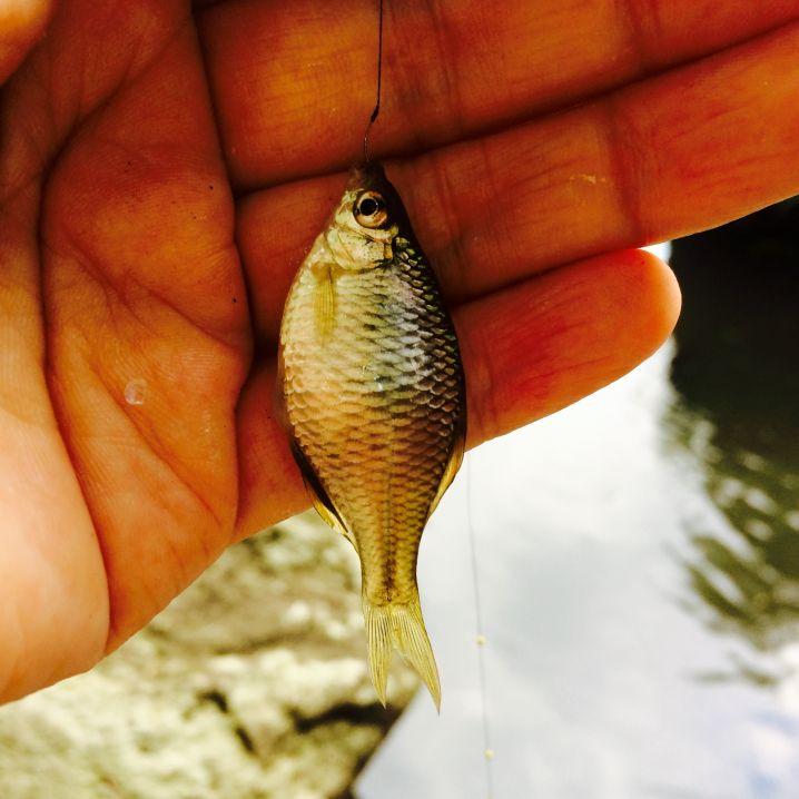 タナゴ釣り? 小物釣り?