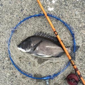 始めまして、和竿でヘチ釣りを楽しんでいます。