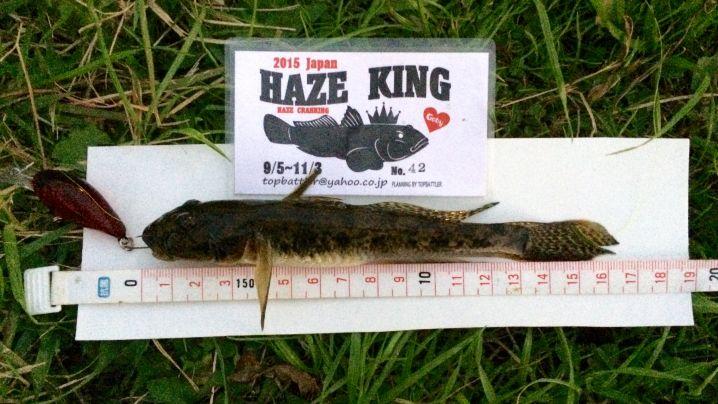 ハゼクラで16.5cm!