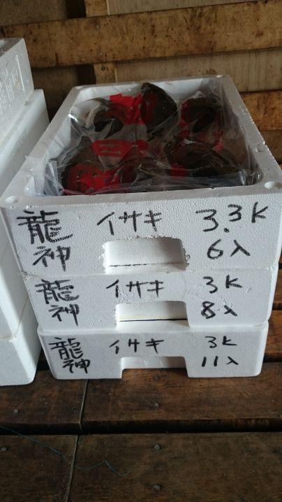 イサキ31枚真鯛1枚 今年の総集編です