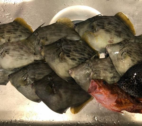 冬のカワハギ は肝パンで美味い!