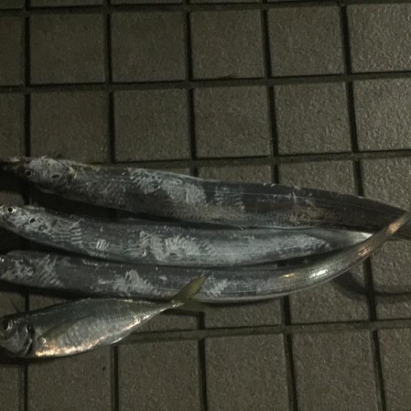 太刀魚 鯵