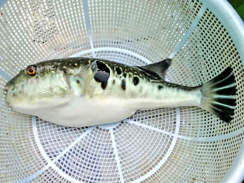 晩秋の湾フグ釣りは、五目釣り?(2020年11月22日)