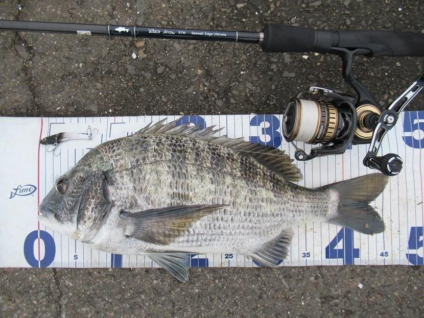 ひっさびさの魚