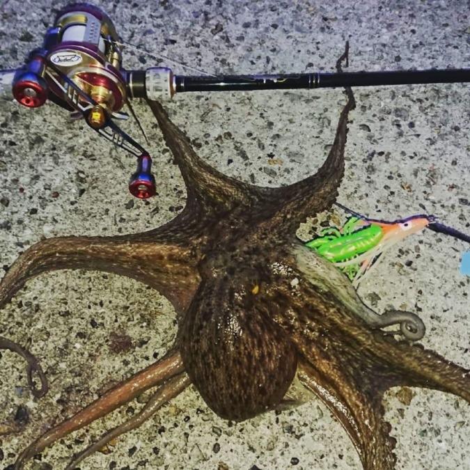 蛸狩人からのライトショアジギング👍