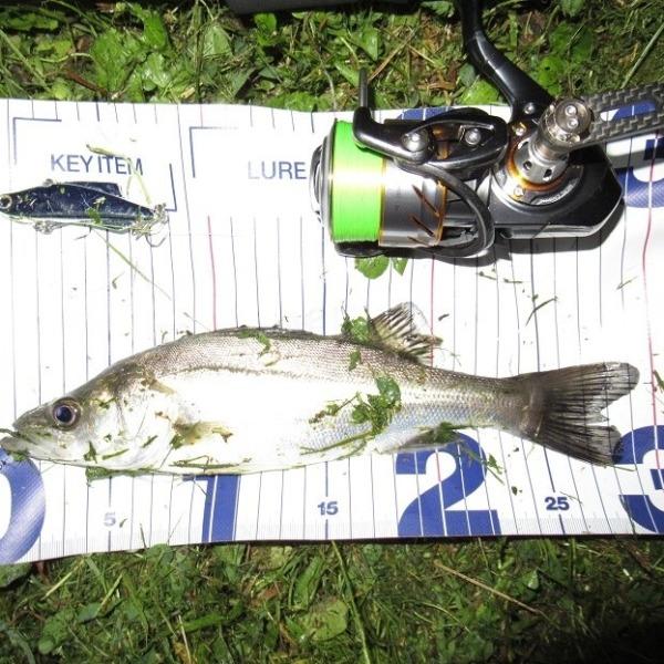 逃がした魚は大きい