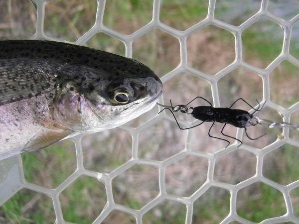 片品川国際鱒釣場さんに釣行 4時間で釣果は何と137匹 ハンドメイドルアーも好調でした(´^ω^`)