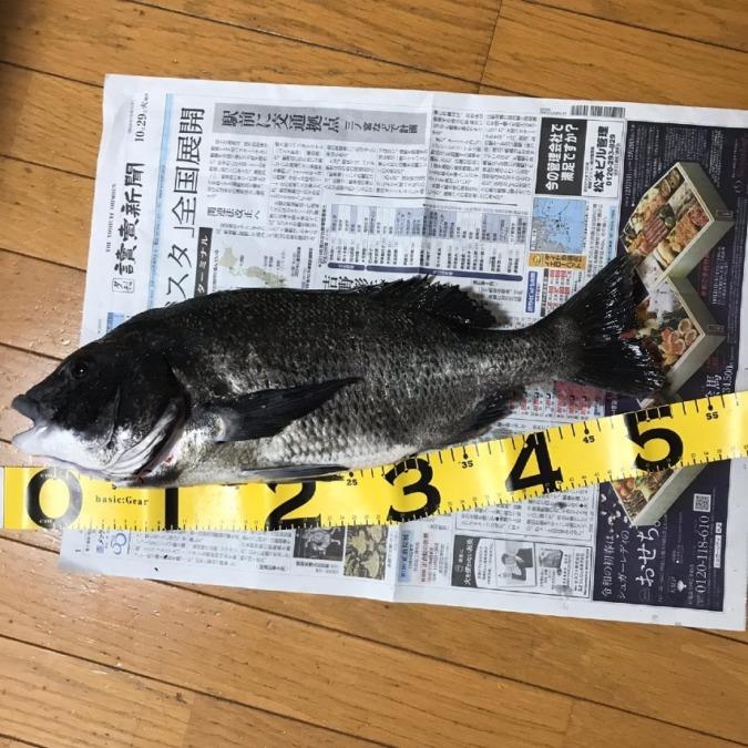 武庫川で51cmのチヌ!!