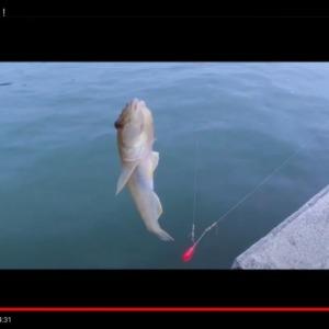 糸島でハゼ釣り!