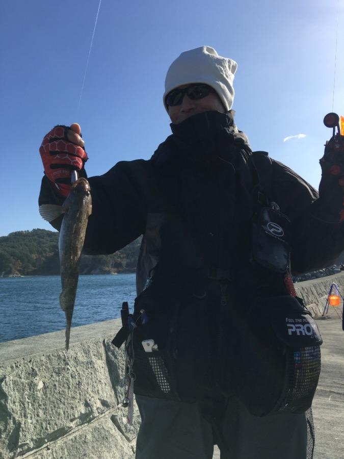 11月17日アイナメ爆釣