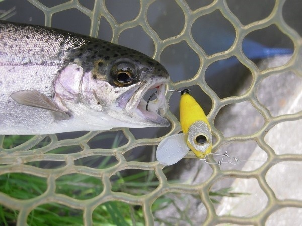 片品川国際鱒釣場さんに釣行 4時間で釣果66匹 ハンドメイドルアーも釣れました(´^ω^`)