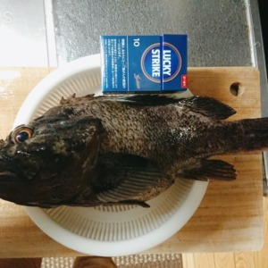 スプーン釣り部:釣果報告💰