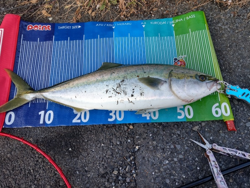 久しぶりの青物釣行 ジグパラ新カラーのおかげです