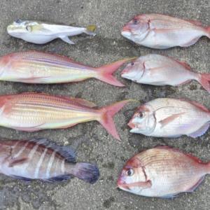 2019年の釣り納めは土佐湾でチダイ狙い(2019年12月29日)