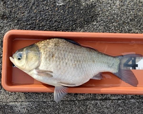 白川で初釣り