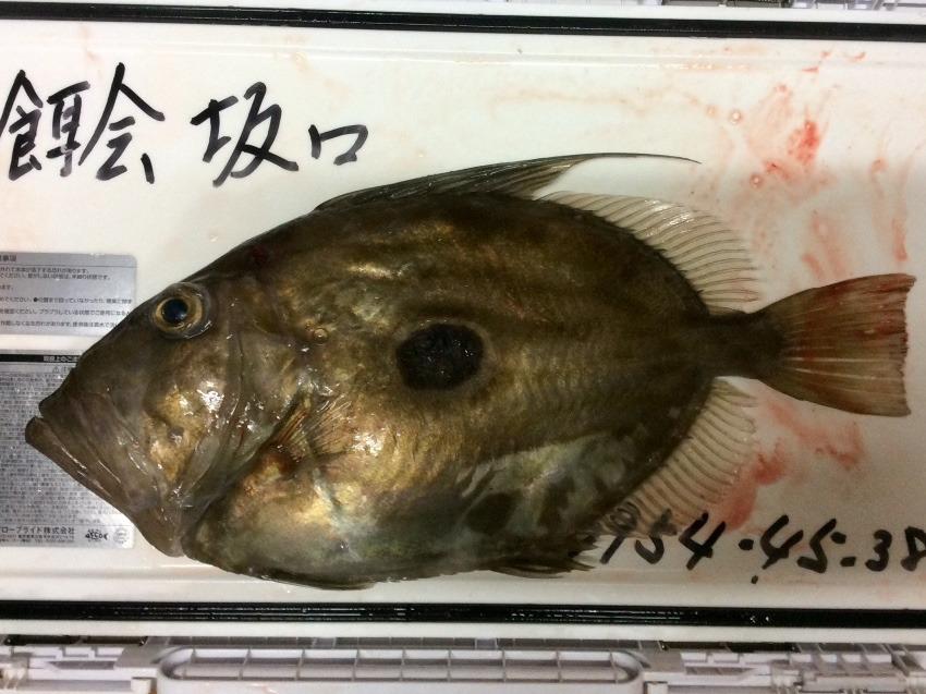 甘鯛漁師 復活‼️