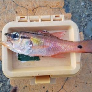 まるで、ayuちゃんみたいな魚?!