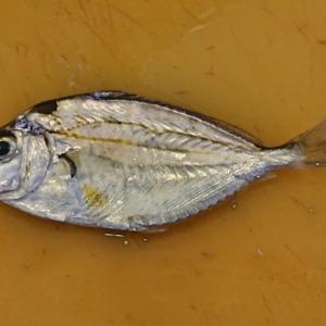 2020年の釣り始めはオカッパリ(2020年1月2日)