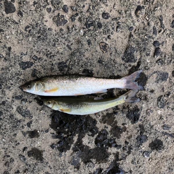 久しぶりの川釣り