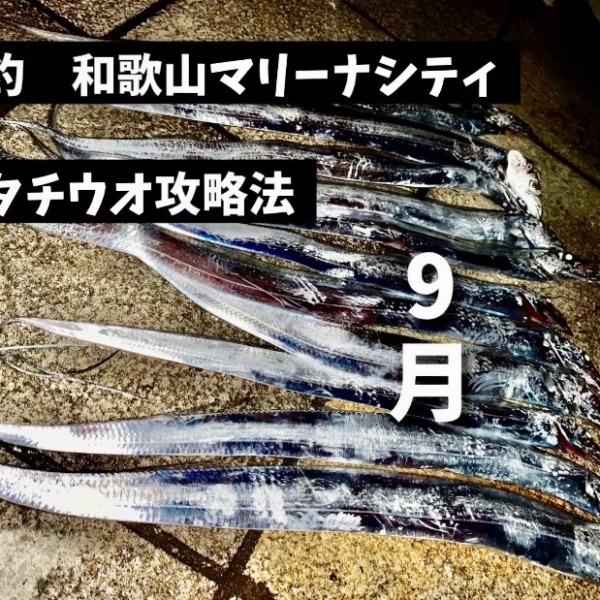9月爆釣和歌山マリーナシティ!