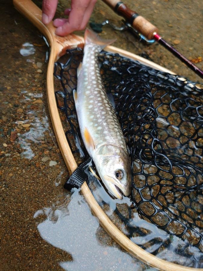 荒れた川でも渓流釣り、…釣れるとは奇跡